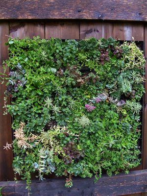 Klimplanten for Substraat betekenis